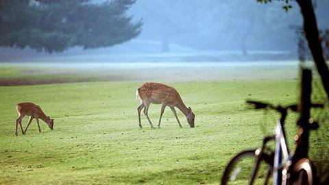 まるで西洋絵画の世界!「奈良公園」の鹿が主役の美しすぎる動画