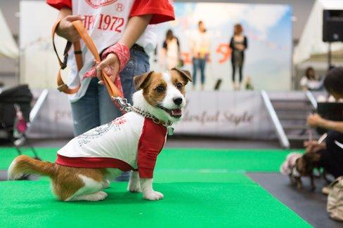 東海はペット天国だった。愛犬と旅行するのに「静岡県」が人気なわけ