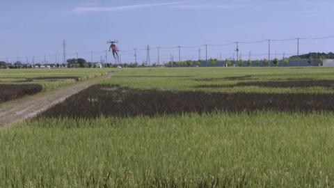 行田市やりすぎ…ギネス認定の田んぼアートにドローン宇宙人が到来