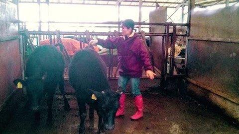 牛の人工授精もできる、鹿児島の超本格飼育体験は感染しにくさがカギ