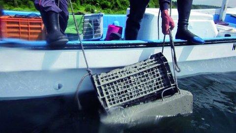 「ウニ」増えすぎで漁協もトホホ。長崎の海を「食べて」守る作戦