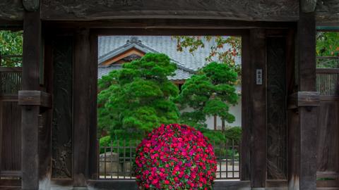 見どころは北欧と和のコラボ。フラワーアート展「新花−SHINKA−」が福岡で開催