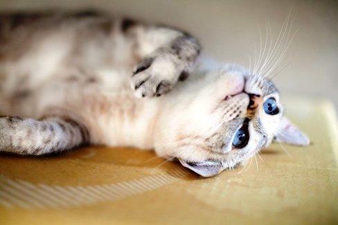 人気の猫が温泉宿でおもてなし。全国の「看板猫ランキング」発表