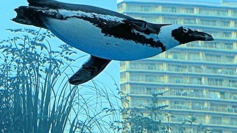 ペンギンが空を飛んでいる!? サンシャイン水族館の斬新な展示が話題