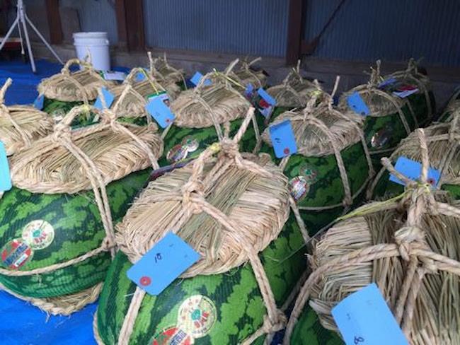 収穫した西瓜は傷防止のため藁で編んだ「さんだわら」を上下に縛りつける