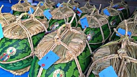 富山名物「入善ジャンボ西瓜」の過酷過ぎる収穫事情