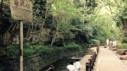 東京23区で唯一の渓谷。世田谷区「等々力渓谷」でグリーンエクササイズ