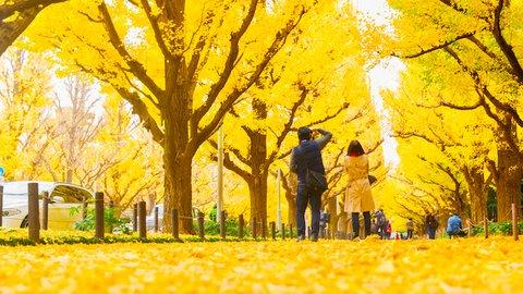紅葉は赤だけじゃない。金色に包まれるゴールデンな「黄葉」スポット