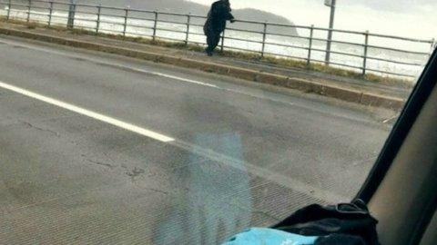 橋の上でたそがれている北海道のヒグマが話題