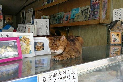 長崎は猫の街だった。幸運を連れてくる「尾曲がり猫」がたくさん
