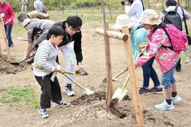子供たちの夢と共に元気に育つ「アオダモの木」