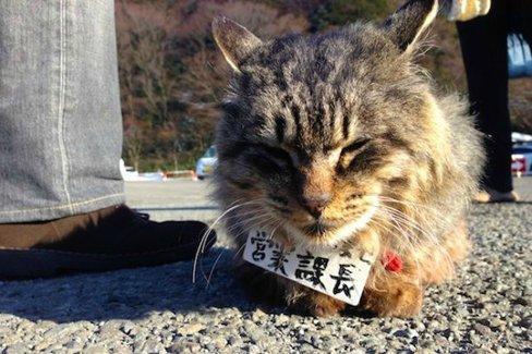 箱根で集会を開いている「営業猫」たちにめっちゃモフモフしたい