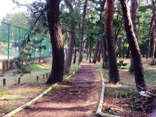 気比松原の松林で散策