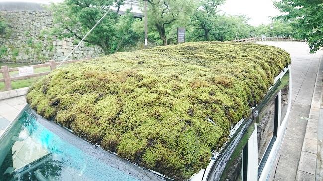 屋根に敷いた苔は「スナゴケ」という品種。天然ものを特別な許可を得て譲り受けている