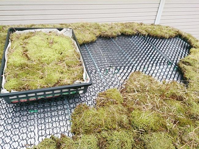 屋根の上に猫除け用シート「どんとキャット」をしつらえ、これに苔を挿して固定させる