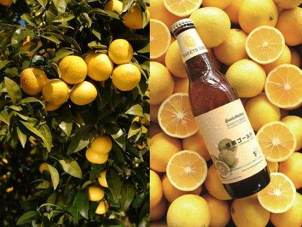 世界で受賞歴もある地ビール「湘南ゴールド」が、ビールと呼ばれないワケ