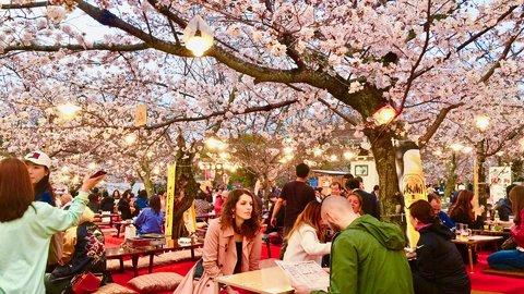 韓国人が最多、花見目当てで3月の訪日外国人は過去最高に