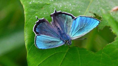 梅雨の晴れ間に舞う、息をのむほど美しい蝶たち