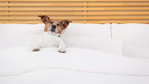愛犬と一緒に旅行したいけど…無駄吠えOKな宿なんてないでしょうか
