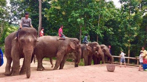 たった1日で免許が。ラオスで「ゾウ使い」の資格にチャレンジ