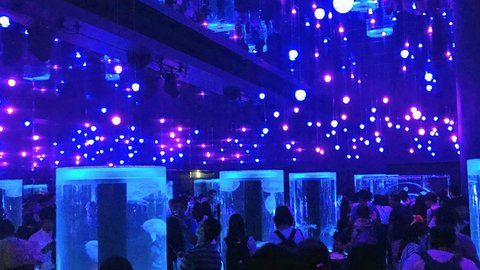 夜の動物園に、夜の水族館……全国で人気拡大「夜の○○」施設