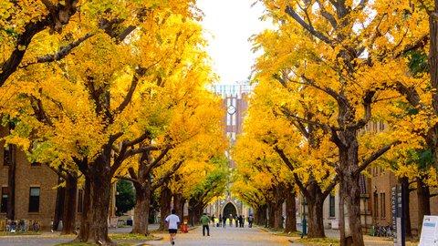 大学の紅葉はきれいだった……学生時代を思い出す秋のキャンパス散策