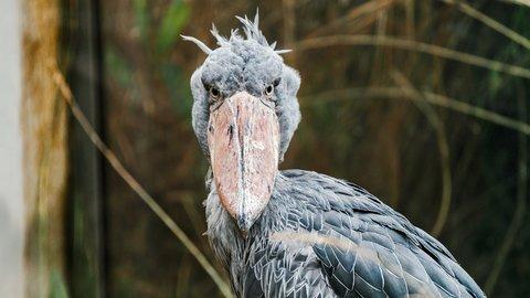 ハシビロコウブームはまだ続くのか?旅好きが選ぶ「水族館・動物園」TOP10