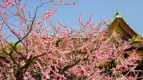 たおやかに春を告げる。京都で訪れたい「梅の名所」9選