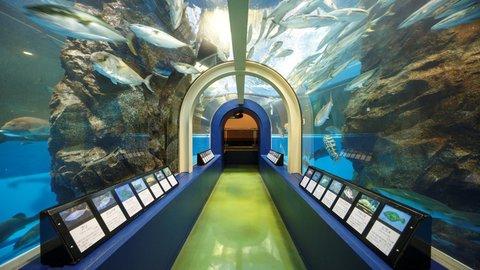 日本最古の水族館。100年以上の歴史を誇る、富山「魚津水族館」