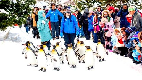 日本のいつもの雪景色に、外国人はなぜここまで心奪われるのか