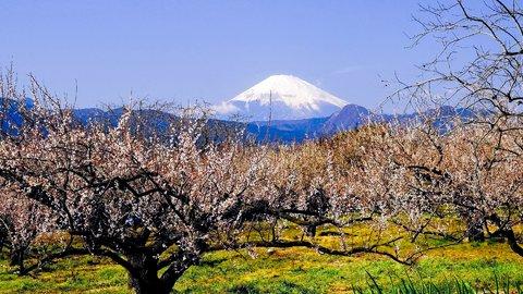 東京近郊で春を感じる。華やかな「梅見」の名所10選【2019】