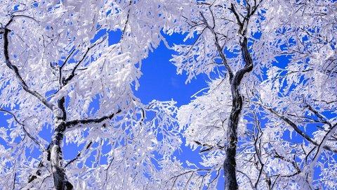 白銀と青のコントラスト。冬の名所をめぐる奈良交通「 霧氷バス」