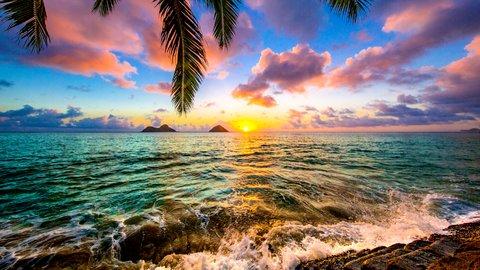 自然の美しさと強さを体感。いま「ハワイ」でやりたい7つのこと