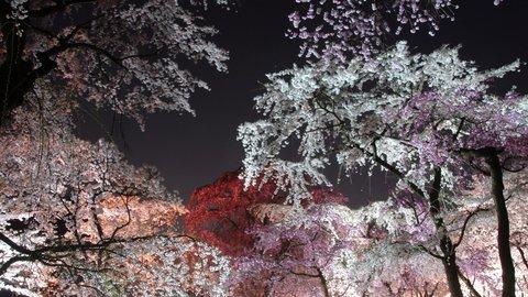 桜って、美しくて面白い。歴史あるお花見の穴場「京都府立植物園」