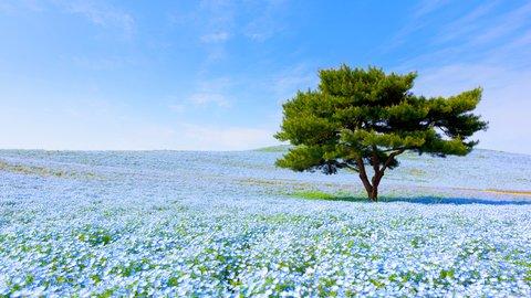 東京近郊で春を探しに。GWにドライブで行きたい絶景スポット5選【2019】