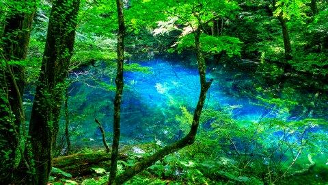 世界が認めた。死ぬまでに一度は行きたい日本の「世界遺産」TOP10