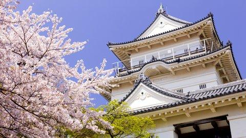 ドライバーが選ぶ、関東エリアの「美しい桜」スポット10選