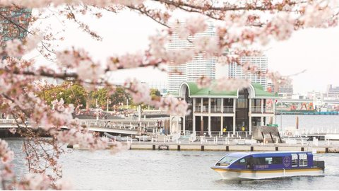 季節感じる桜のトンネル。横浜「大岡川桜クルーズ」で春を満喫