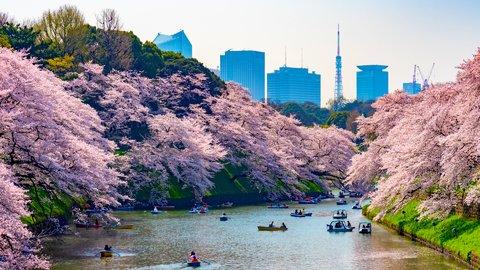 春に恋い焦がれ…絶景の桜が広がる、満足度の高い「お花見」名所10選