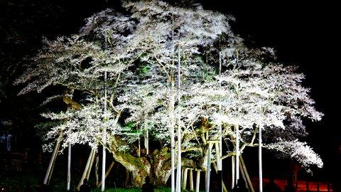 その美しさに息を飲む。日本・海外の絶景「お花見」スポット10選