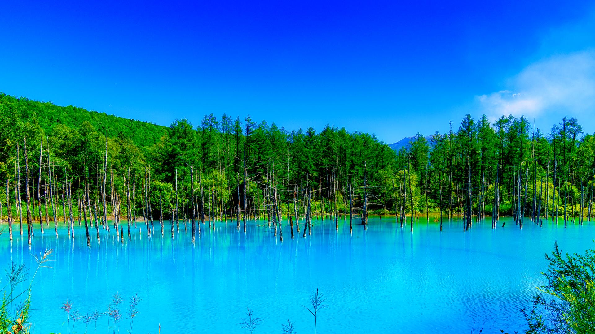 限りなく美しいブルー。北海道・美瑛「青い池」、その魅力とは - TRiP EDiTOR
