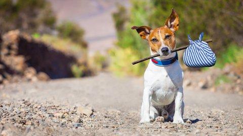 だって家族ですから。愛犬とプライベートジェットで楽しむ空の旅
