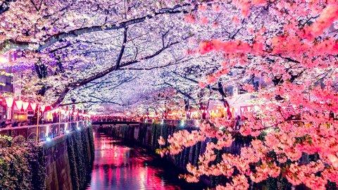 インドア花見もブームの兆し。2019度、東京の「お花見トレンド」
