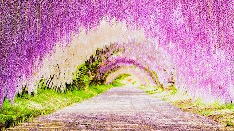 心震える癒しの世界。カラフルな日本国内「花の絶景」スポット10選