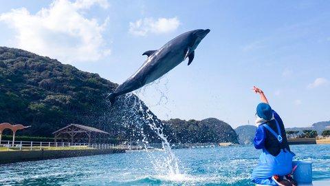 24時間イルカと過ごせる?癒し度MAXの「壱岐イルカパーク」