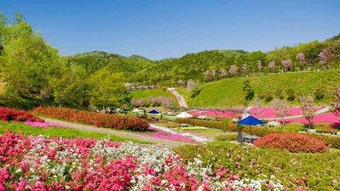 山がまるごとお花畑!京丹後の花公園「花郷OKADA」で春の花めぐり