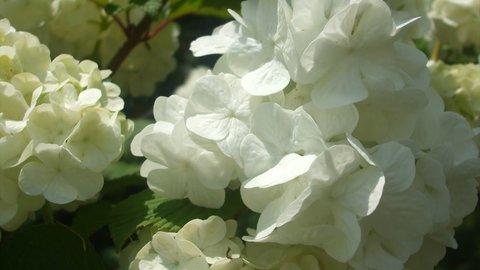 京都・「わち山野草の森」へレッツドライブ!可憐な花々に癒やされよう!