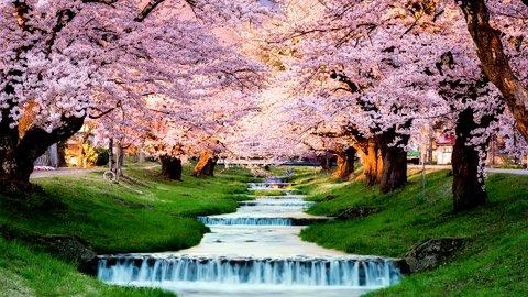 四季を感じに日本へ。増えゆく訪日ベトナム人観光客はどこへゆく?