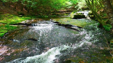 地元ライターが教えるオススメ観光散策2「森の京都」新緑のるり渓