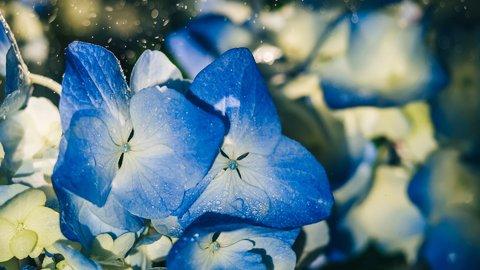 これ知ってる?情緒あふれる、美しい「雨の呼び名」10選